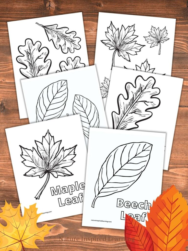 6 printable leaf coloring pages for kids with three colorful fall leafs in the bottom corners text nature inspired learning bottom center all on a wooden background