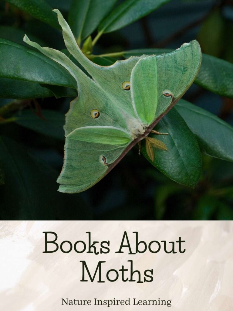 Luna moth on a rhododendron leaf text books about moths nature inspired learning