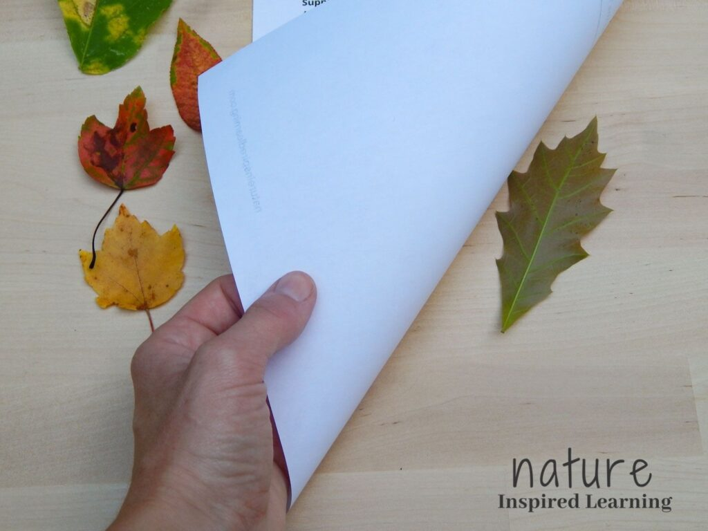 hand flipping up a white piece of paper with an oak leaf under it on a wooden table four coloruful fall leaves to the left of the printable