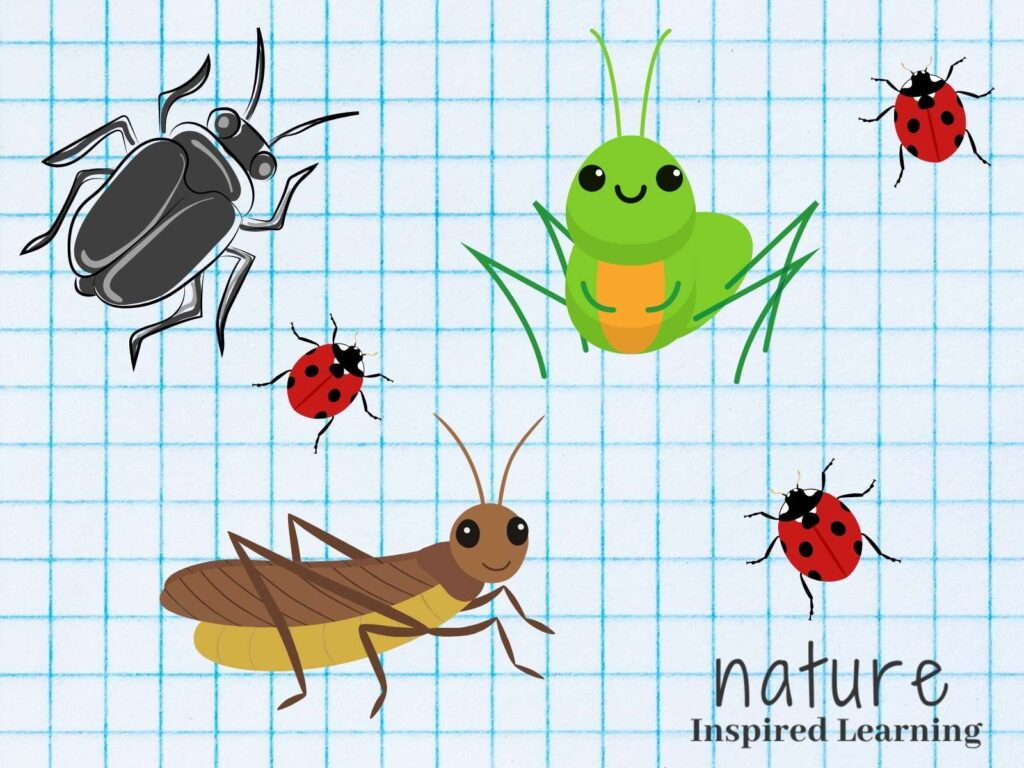 clipart black beetle, brown cricket, three red ladybugs, and a smiling green grasshopper on blue graph paper text nature inspired learning