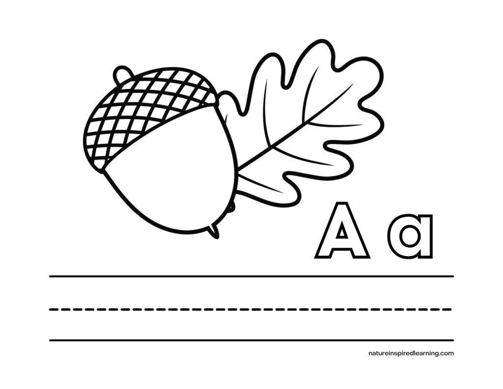 capital A with lowercase a with an acorn and an oak leaf graphic with lines for writing the letters coloring page