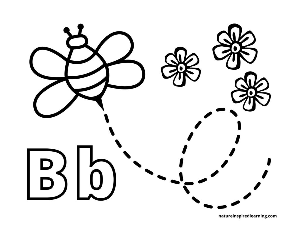 Upper case B and lower case b with one clipart bee flying up with a curved and circular dashed line behind it with three small flowers in the upper corner