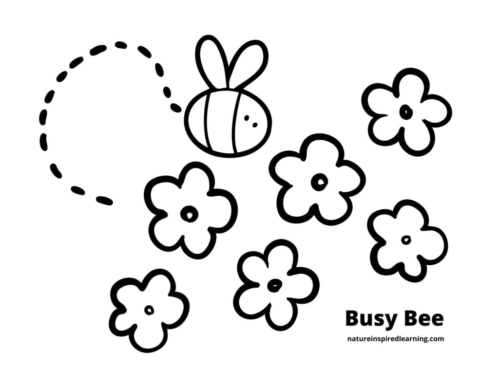 one clip art bee with a dashed curve line behind it and 6 simple flowers with centers coloring sheet