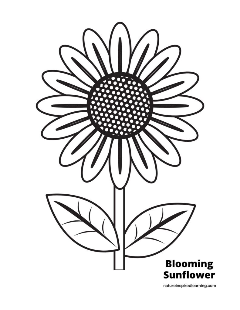 blooming sunflower with a stem and two leaves coloring page text Blooming sunflower at bottom of the sheet