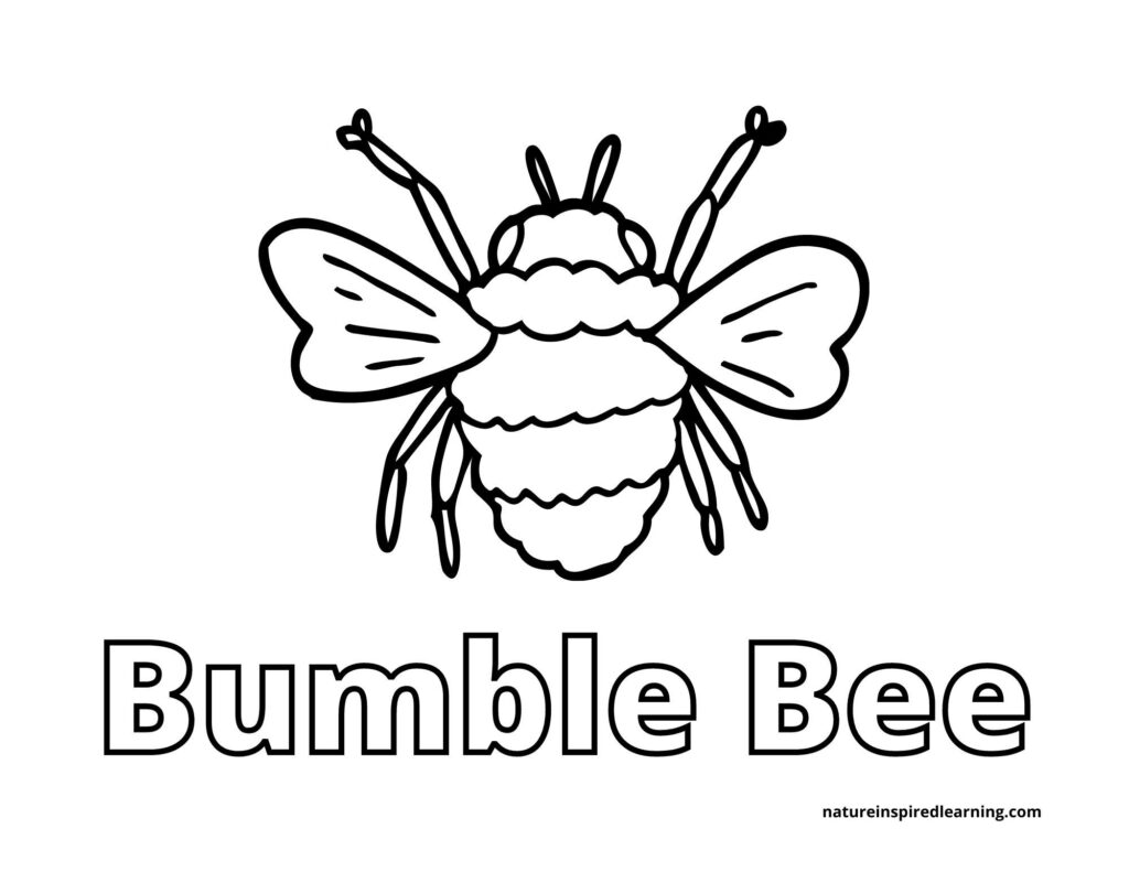 large bumble bee centered on a coloring sheet with the text Bumble Bee written below on the page