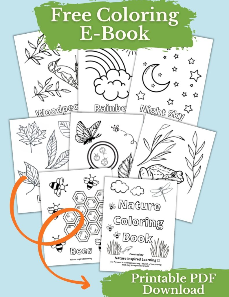 Collection of Nature Coloring Book Pages overlapping each other woodpecker, rainbow, night sky, leaves, keep exploring, frog, bees, and nature coloring book cover page with the title Free Coloring E-Book across the top and an orange looped arrow pointing to the words Printable PDF download