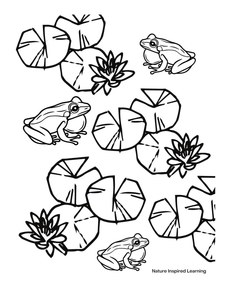three bull frogs with lily pads and flowers coloring page