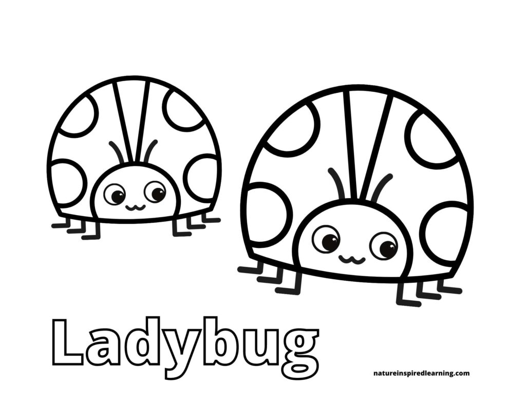 ladybug coloring sheet with two happy ladybugs next to each other with spots the word ladybug written in outline form below images