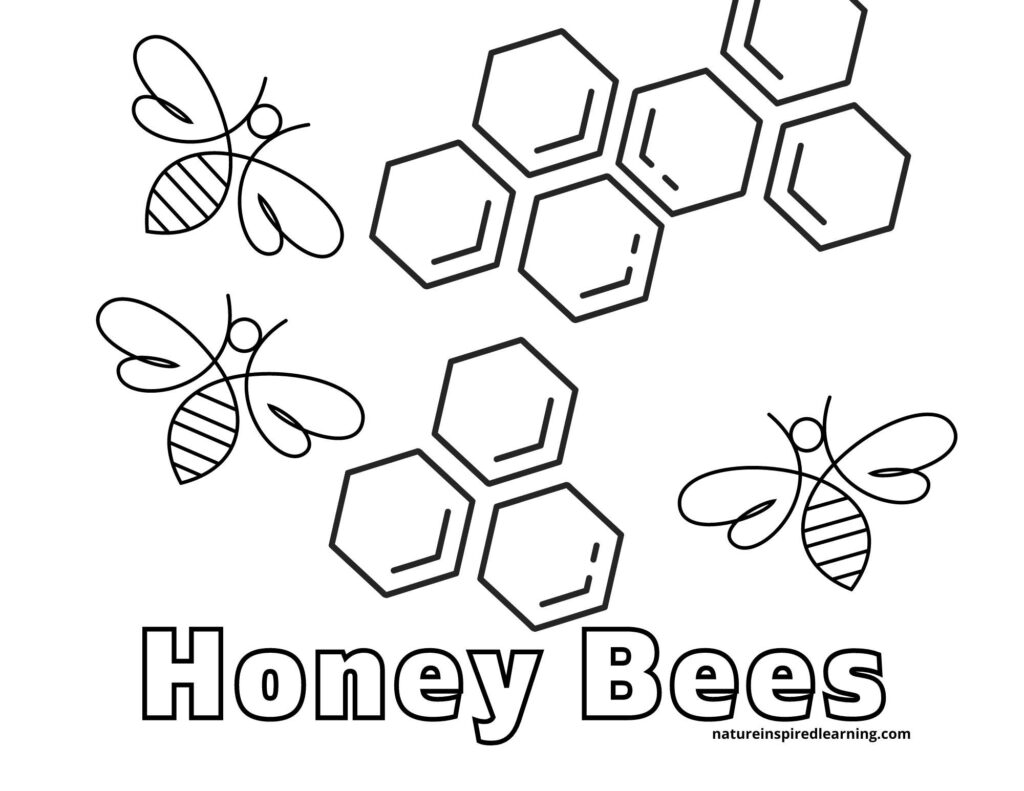 Honey Bees coloring page with three honey bees flying around honey combs text Honey Bees written on sheet