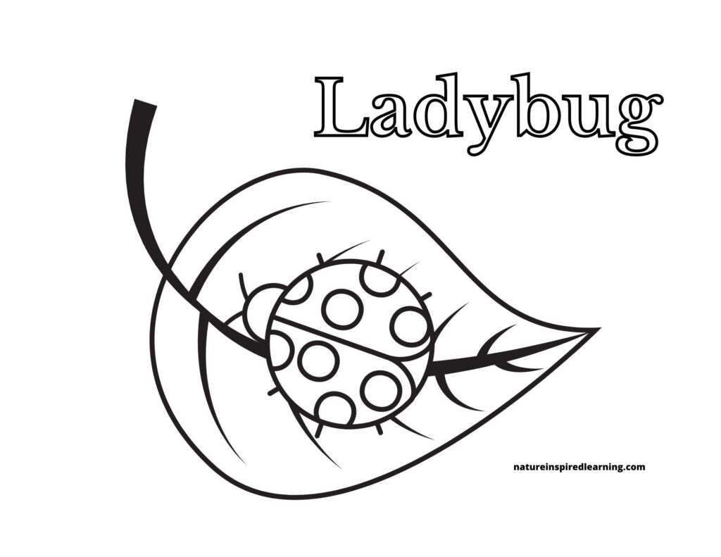 printable ladybug coloring page with one lady bug on a large leaf word Ladybug written in bubble text above image
