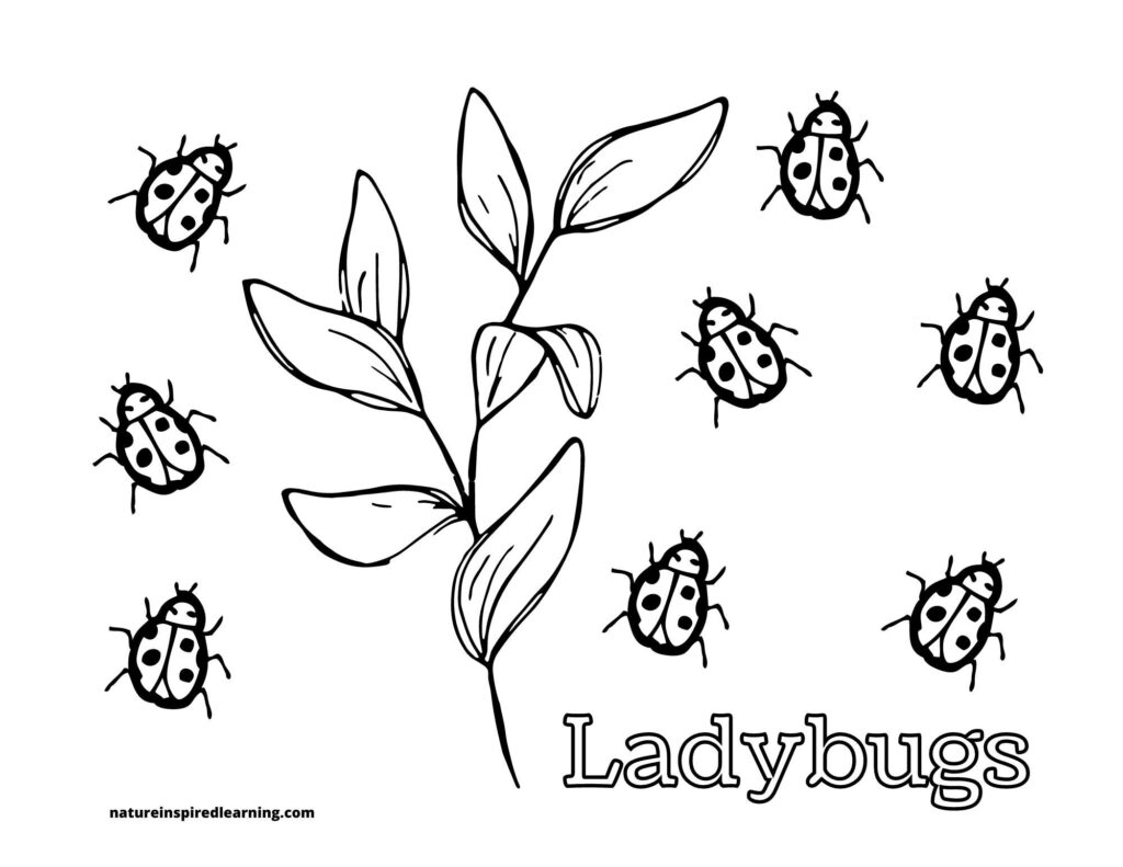 Ladybugs coloring page with eight little lady bugs crawling around with a stem with leaves on it dividing the page word ladybugs written below