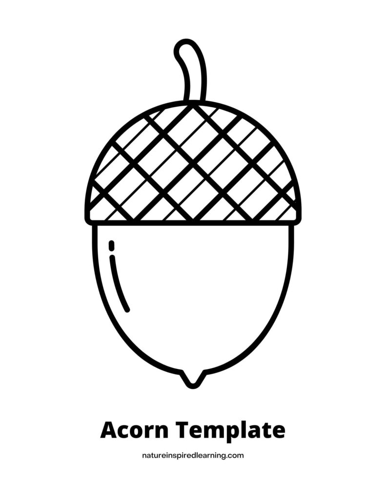 Acorn coloring page with a large acorn outline in the center with criss cross top text acorn template across bottom
