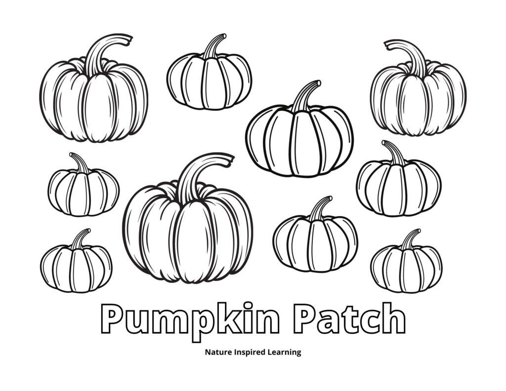pumpkin patch coloring sheet with simple pumpkin shapes of different sizes word pumpkin patch written in outline for across bottom