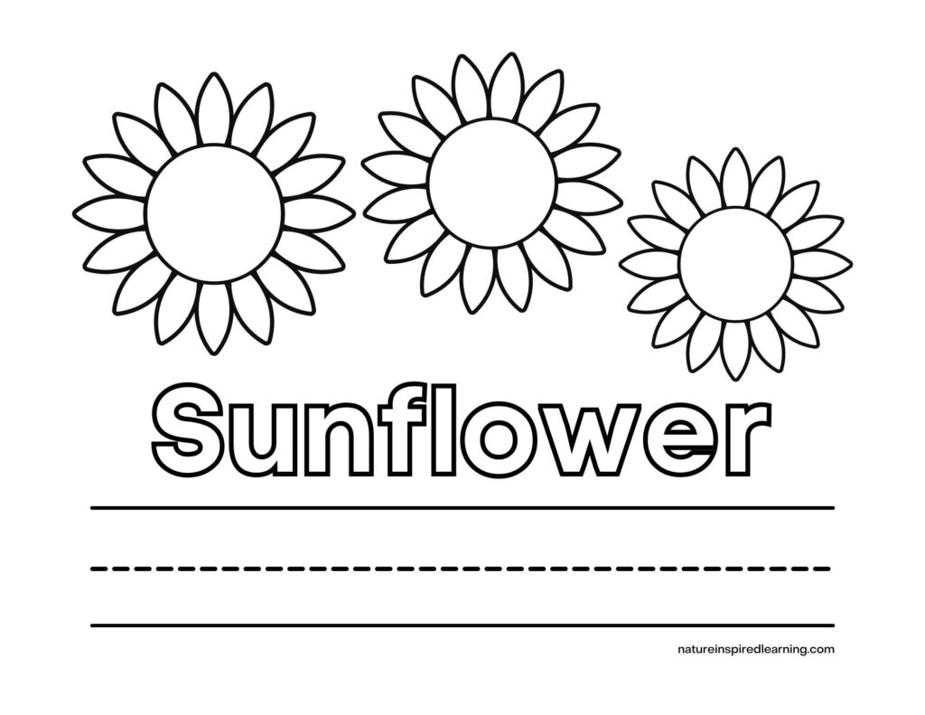 sunflower coloring sheet three plain sunflower heads with the word sunflower written in outline with lines below for writing the word sunflower
