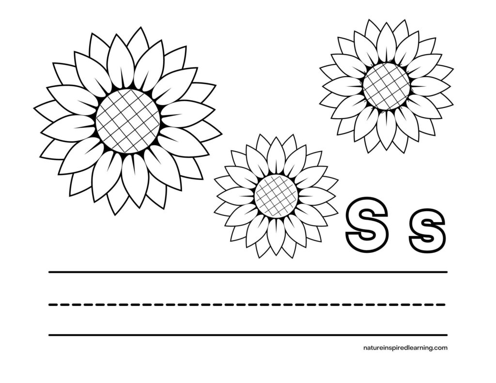 sunflower coloring page with three sunflower heads criss cross centers with Upper case S and lower case s with lines to write