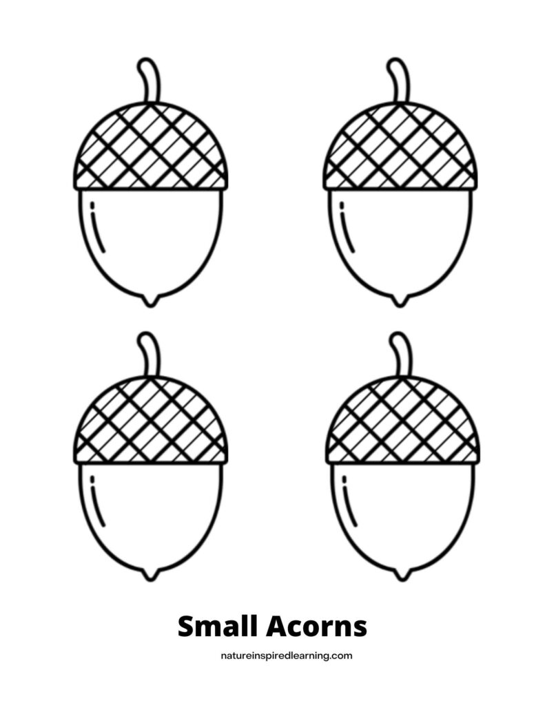 Acorn coloring page with four small acorns all the same size with criss cross lines diagonal on the acorn top text Small Acorns across bottom