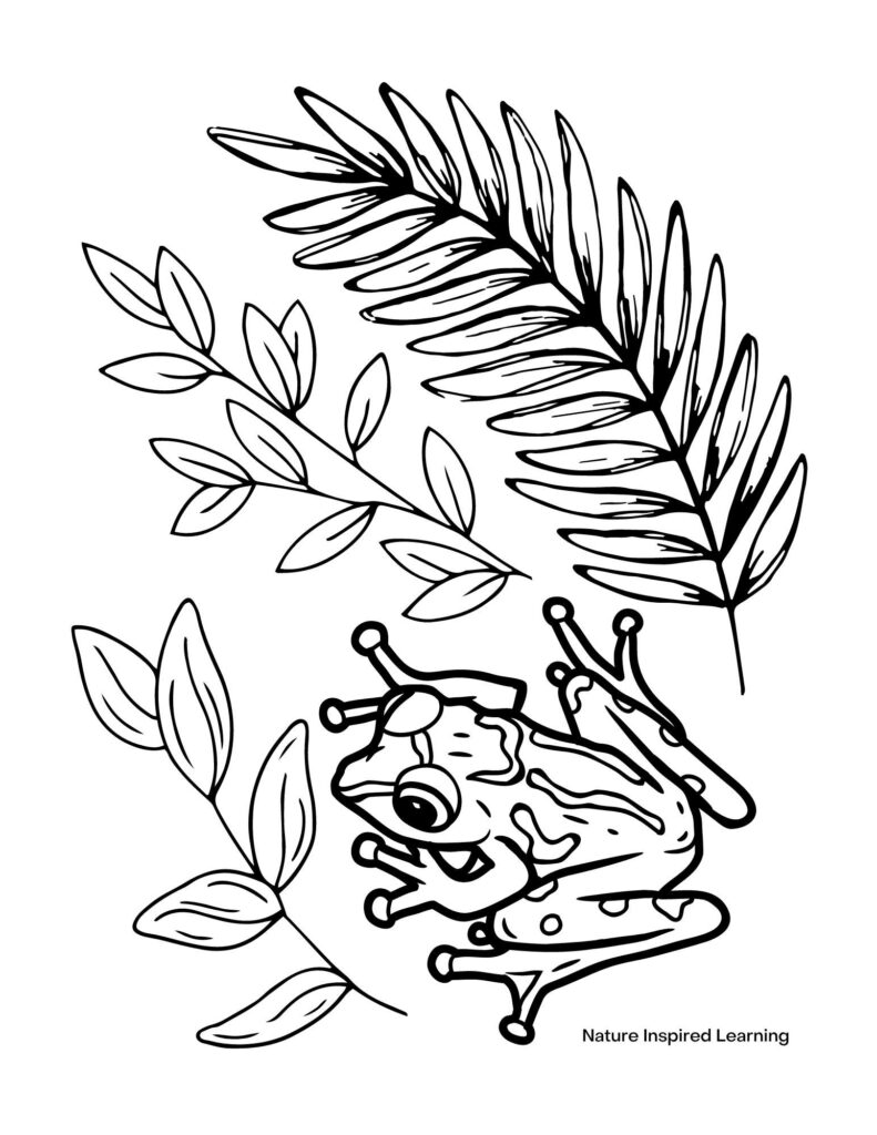 tropical frog with spots in a forest of leaves coloring sheet