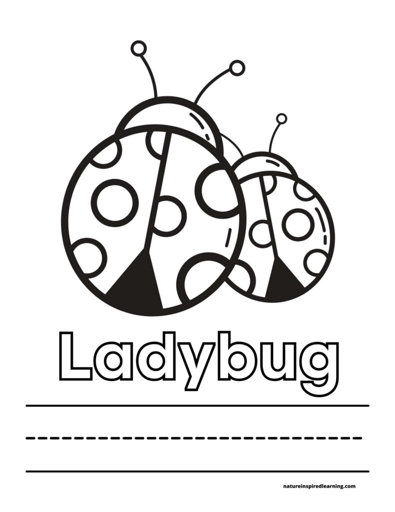 ladybug coloring sheet with two ladybugs above the word ladybug written in outline form with lines below to write the word ladybug