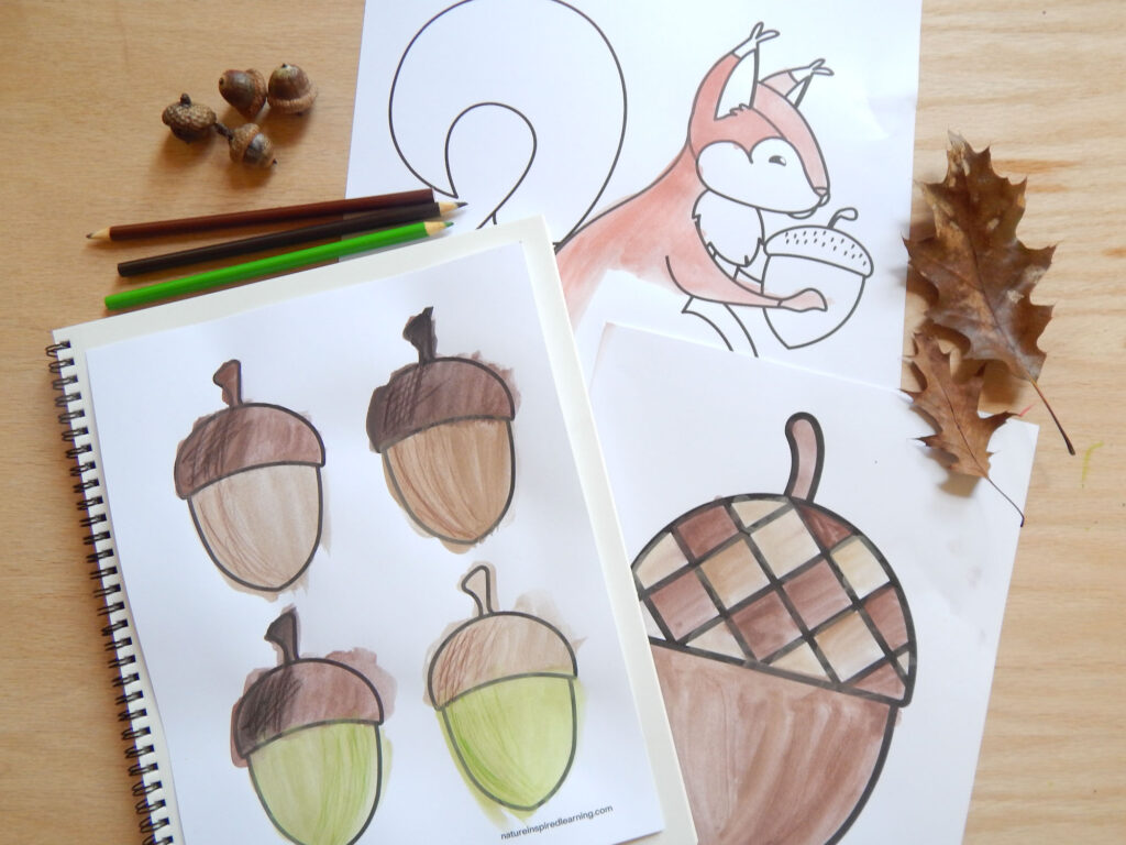 collection of acorn and squirrel coloring pages painted in using watercolor paint and colored pencils all on a wooden surface with four real acorns and two real oak leaves
