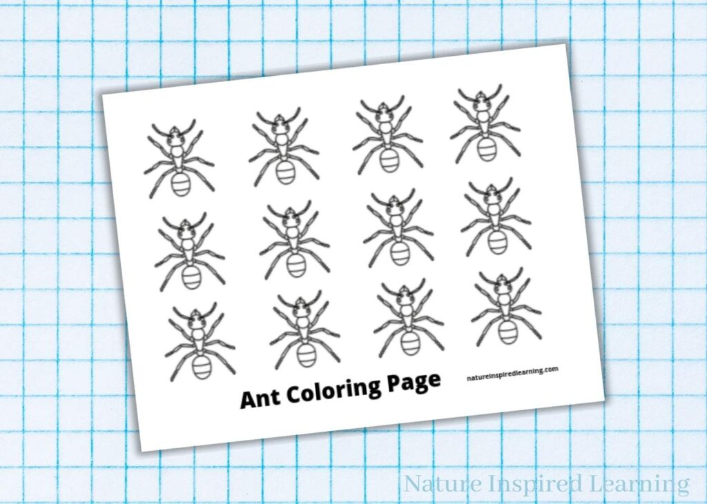 12 black and white ants coloring sheet with text ant coloring page across bottom on blue graph paper