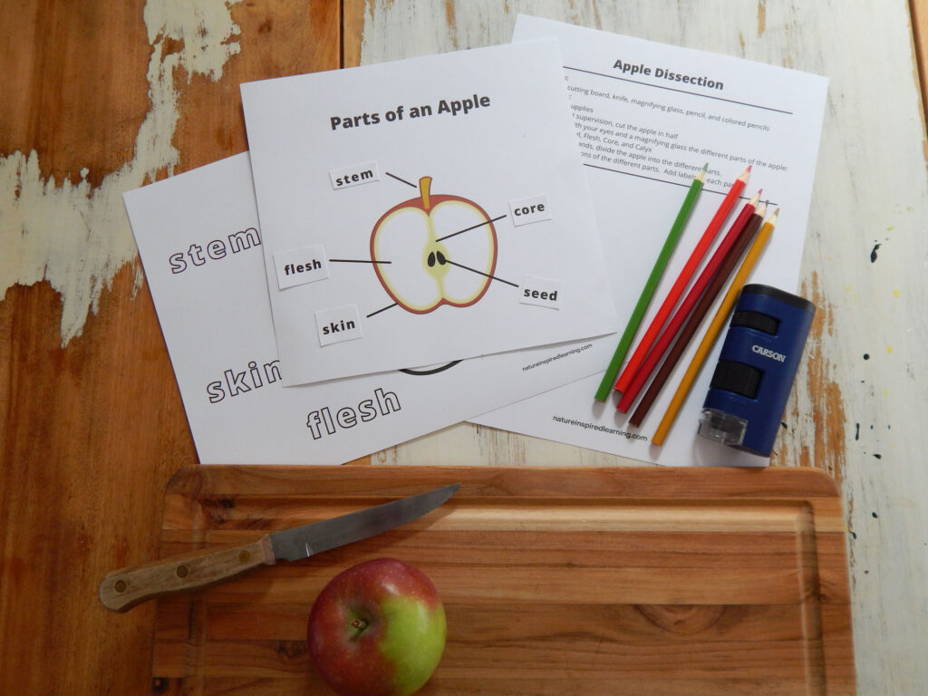 three printable apple diagrams overlapping on a wooden table parts of an apple coloring page, parts of an apple cut and paste worksheet, and apple dissection printable. Five colored pencils and Carson field microscope on printable. Wooden cutting board with a Macintosh apple and a metal knife with wooden handle below printables.