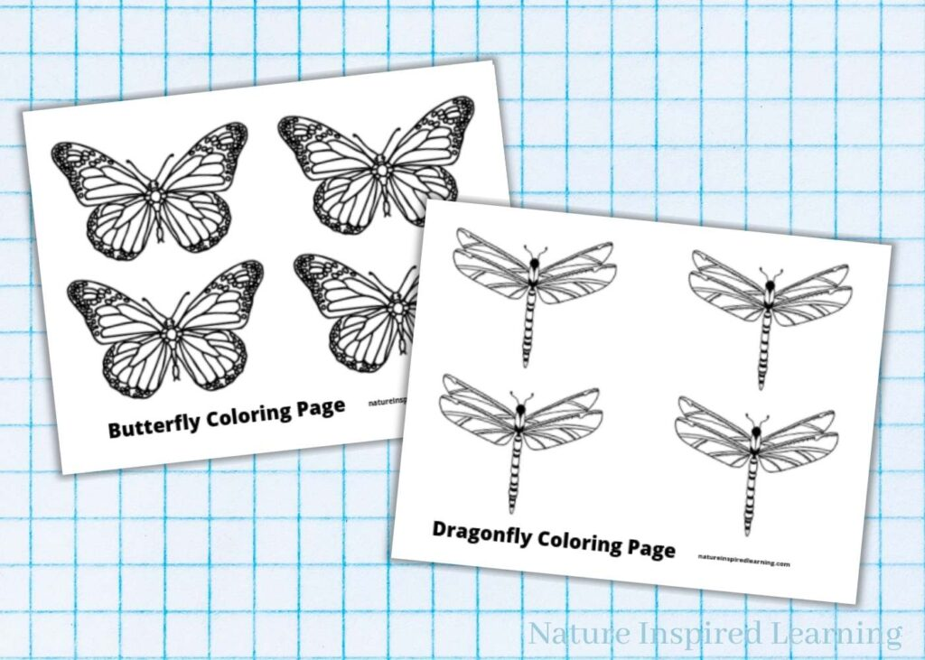 printable butterfly coloring page with printable dragonfly coloring page overlapping it light blue graph paper background