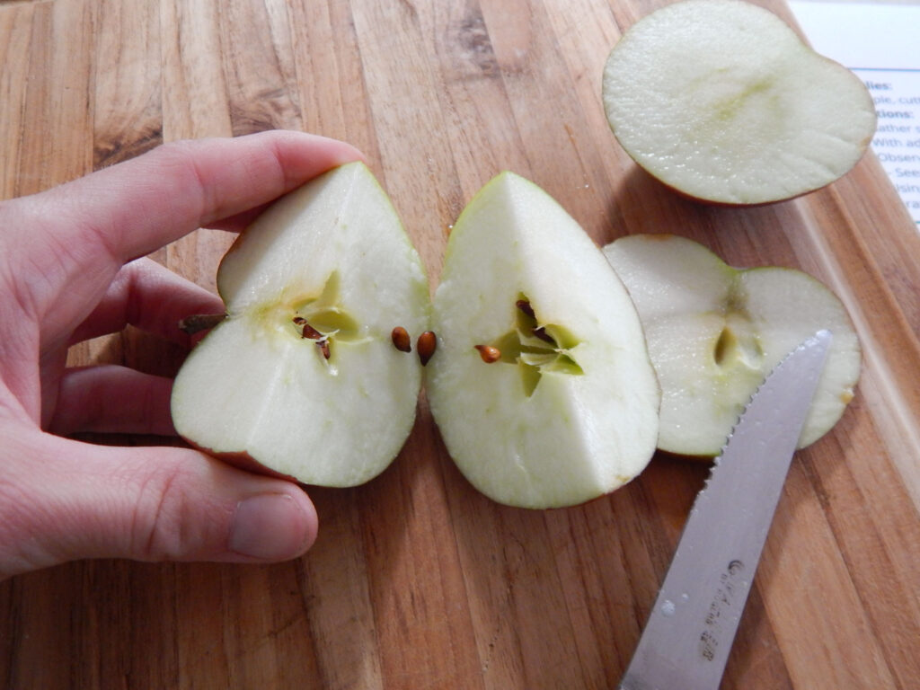 hand holding one half of a cut apple with seeds falling in between the two halves two more apple slices on wooden cutting board with a metal knife