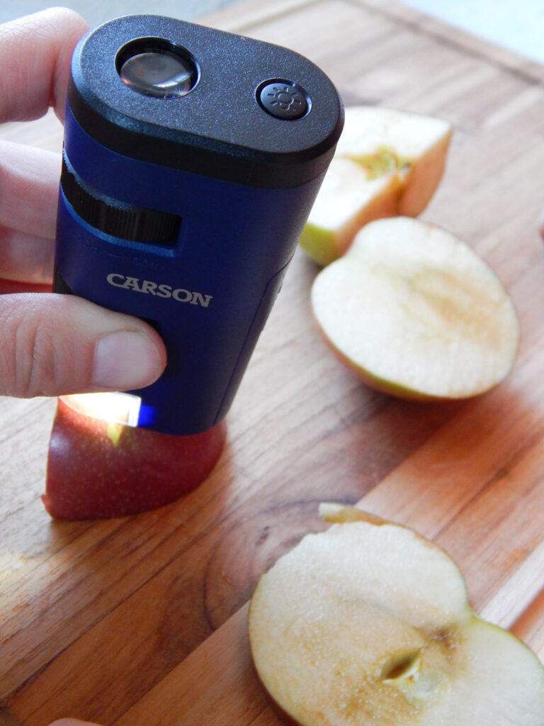 hand holding an Carson field microscope during an apple dissection apple slices on a wooden cutting board