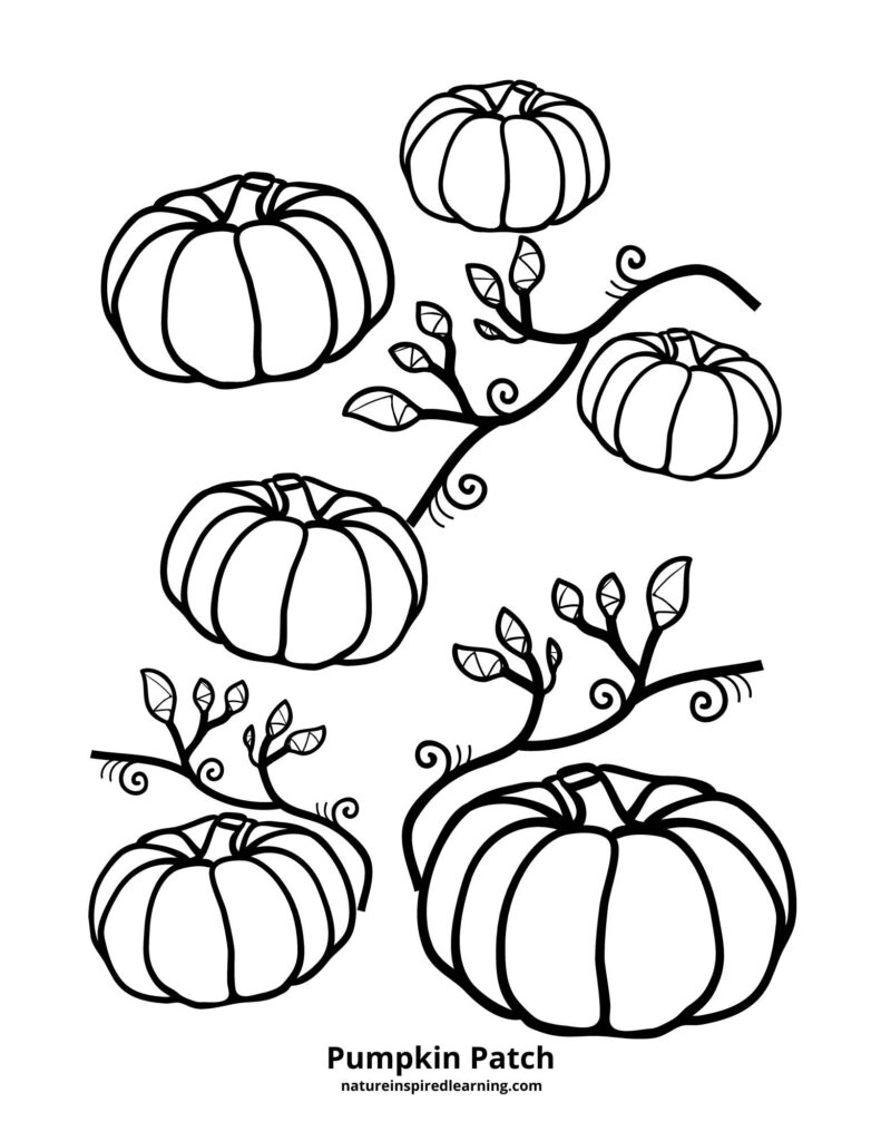 a pumpkin patch coloring sheet with a collection of pumpkins with vines and leaves