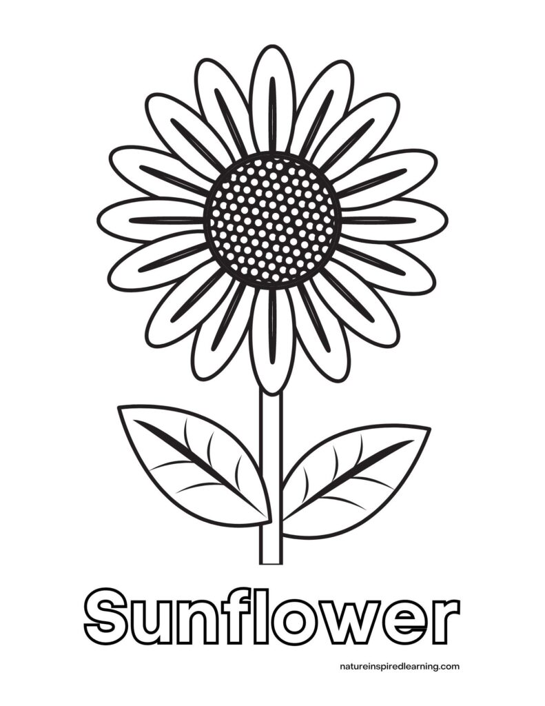 cheerful sunflower clipart with two leaves and a stem black center with white spots with the word Sunflower written in bubble letters below image