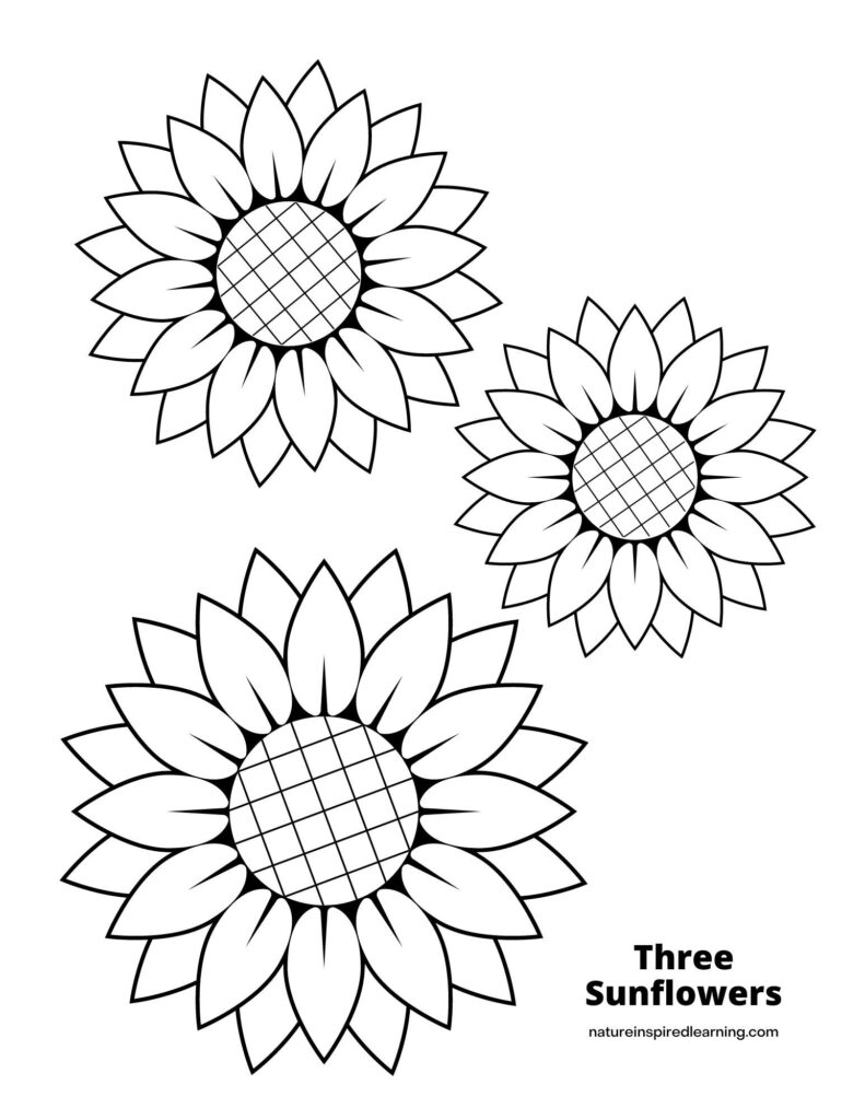 three different sized sunflower heads with criss cross centers on a coloring page text Three Sunflowers on bottom corner
