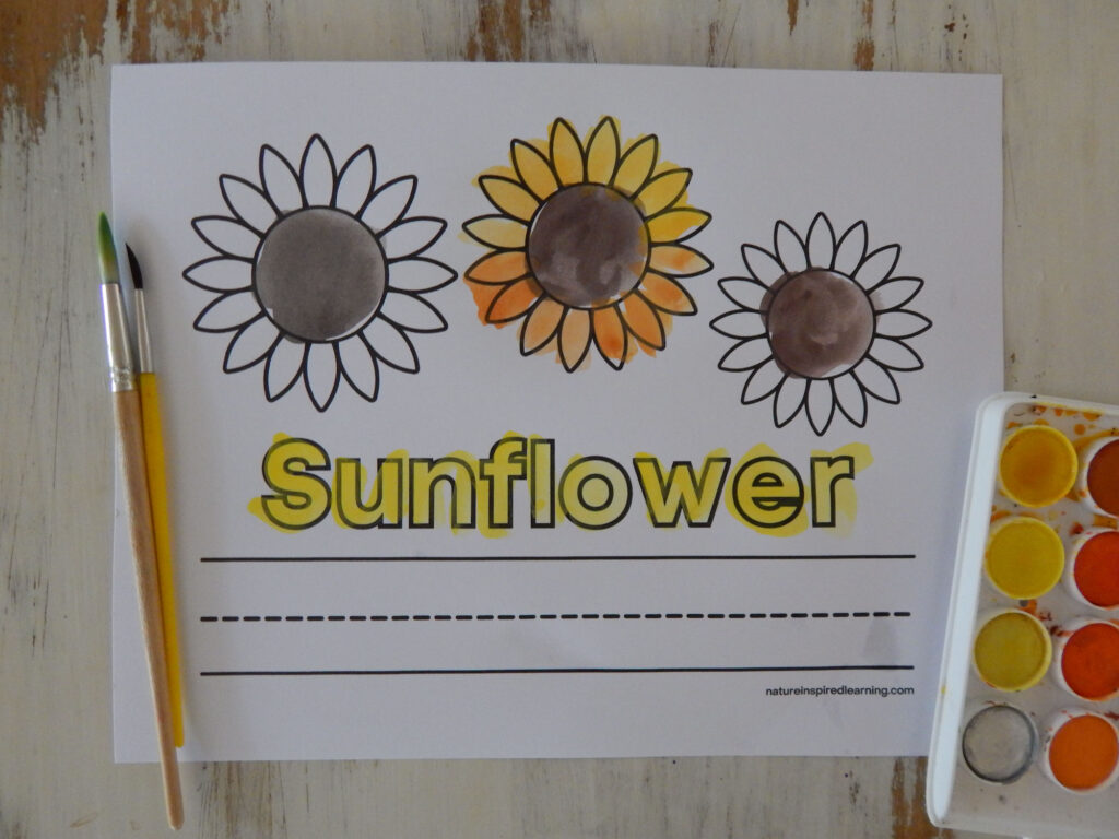 sunflower coloring page for kids with lines to write the word sunflower painted in three sunflower heads with brown paint and one with painted petals two paint brushes to the side and a paint set in the bottom corner