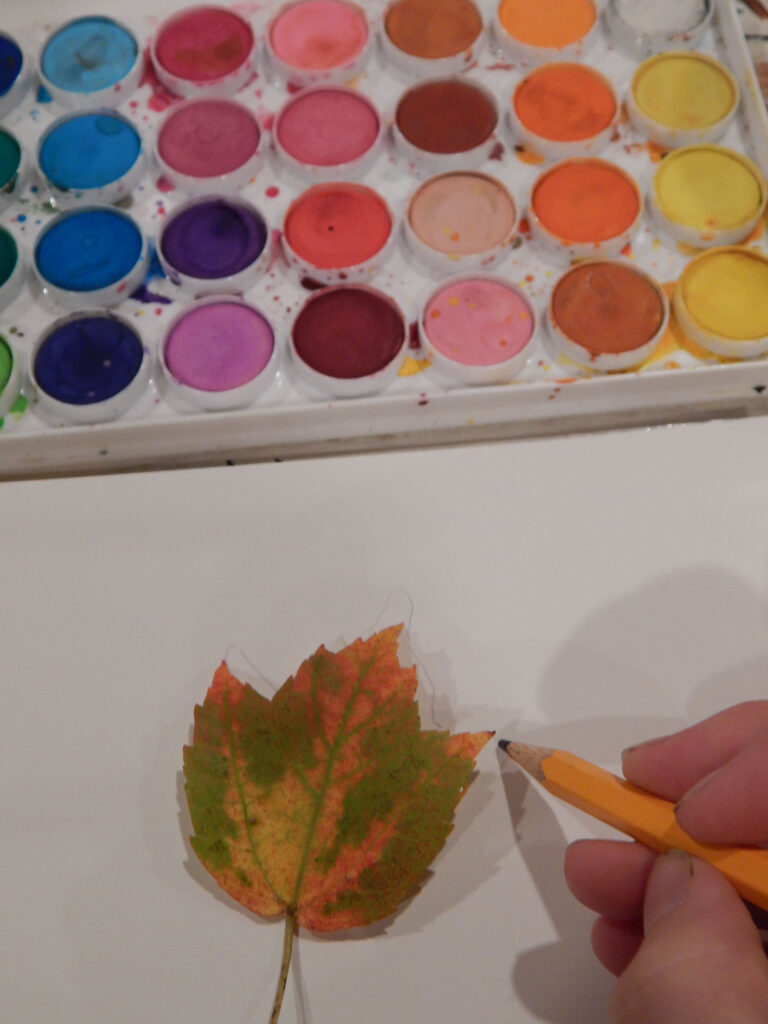 hand holding a pencil while tracing a fall maple leaf watercolor paint set above