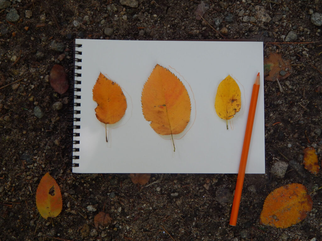 three yellow orange fall leaves on a blank spiral bound notebook page traced using orange watercolor pencil pencil to the right of the leaves additional fall leaves on dirt ground
