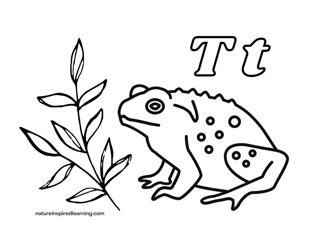 Toad clip art with green leaves on a branch with the upper case letter T and lowercase letter t coloring page