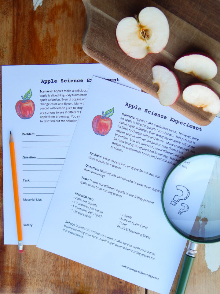 two apple oxidation science experiment worksheets overlapping on a wooden table pencil to the left green magnifying lens to right wooden cutting board with an apple cut in half and three apple slices above