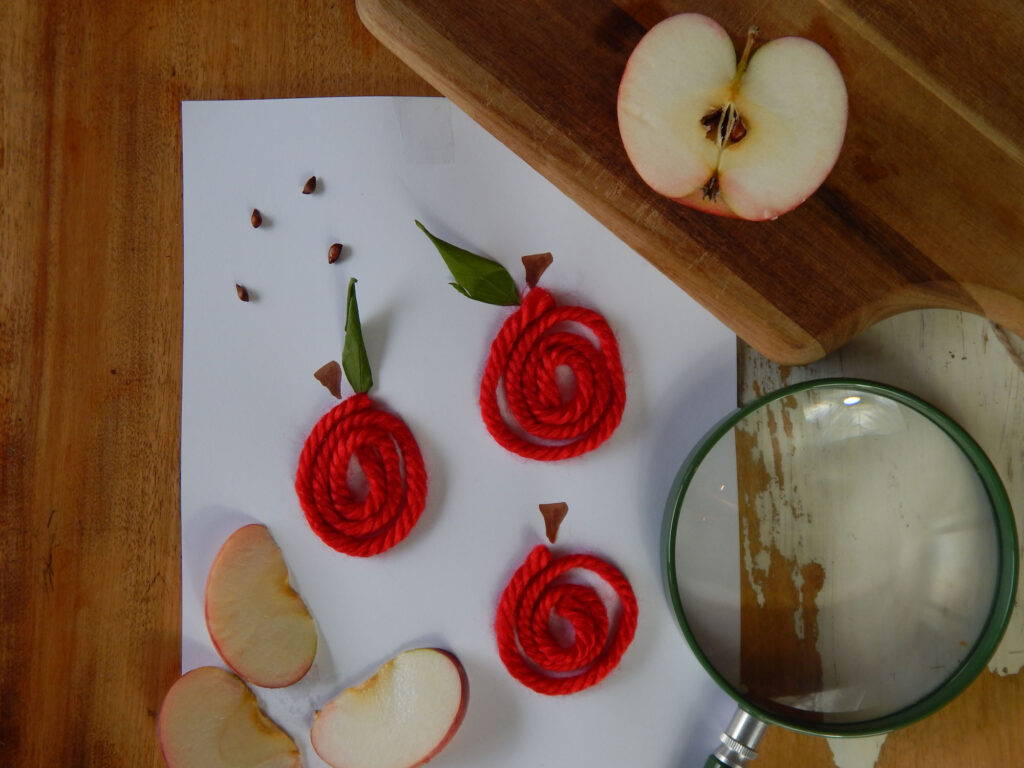 apple yarn art made with red yarn and real green leaves on white paper four apple seeds above three apple slices below green magnifying lens to bottom right half an apple cut open on wooden cutting board