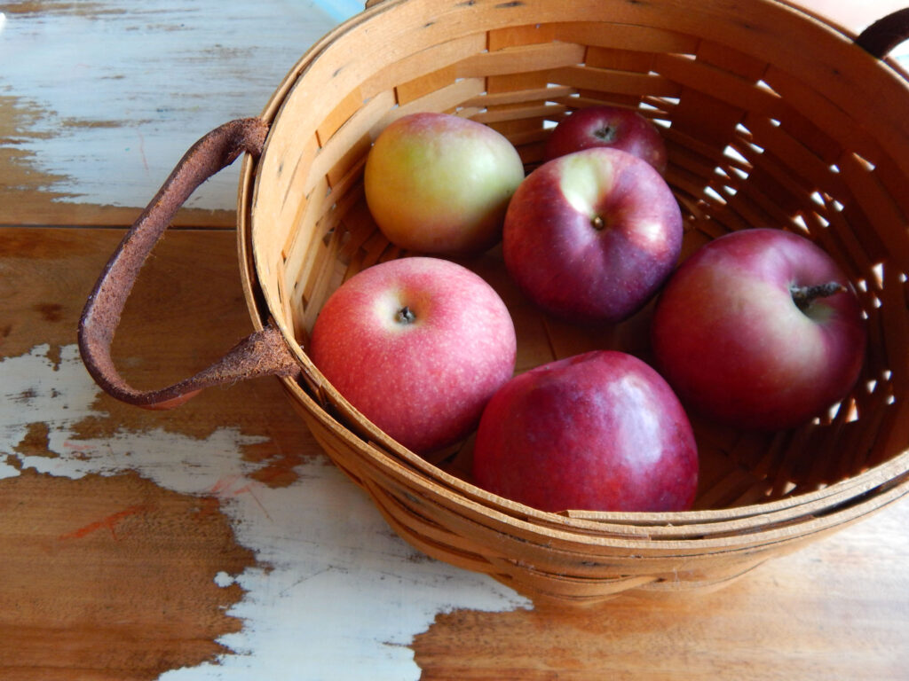 circular wooden basket with leather handle with freshly picked red apples on a wooden table