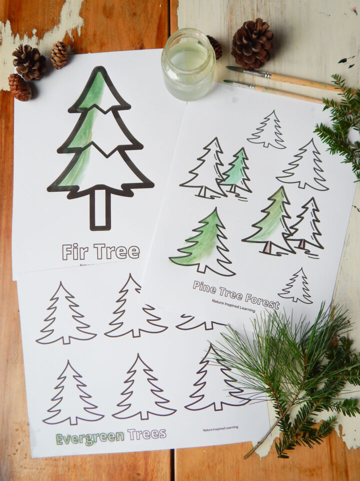 printed off pine tree coloring pages overlapping each other on a wooden table partially painted in with green and brown paint in different shades small pine cones on top of the pile with a jar of water two wooden paint brushes and a collection of real evergreen branches to the right of the coloring pages