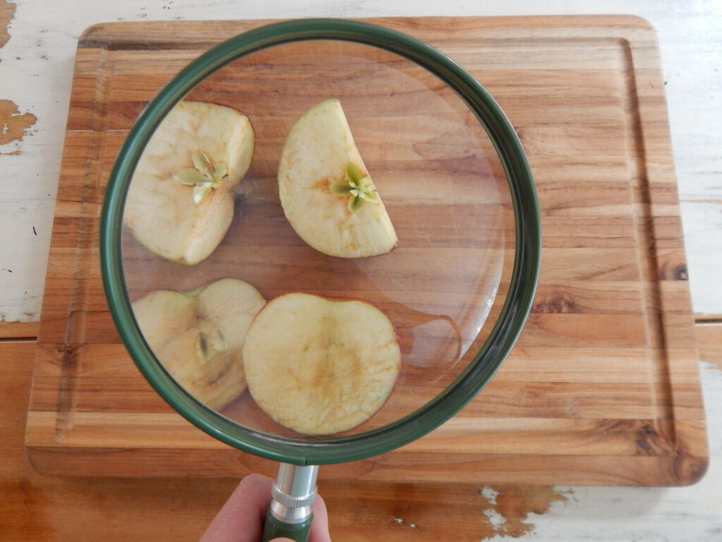 green magnifying glass over a cut up apple on a wooden cutting board hand holding the handle cutting board on a wooden table with white chipping paint